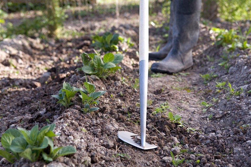 Four Ways To Hoe In Pictures Bbc Gardeners World Magazine