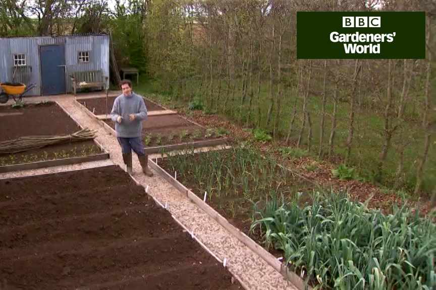 How to practise crop rotation with veg