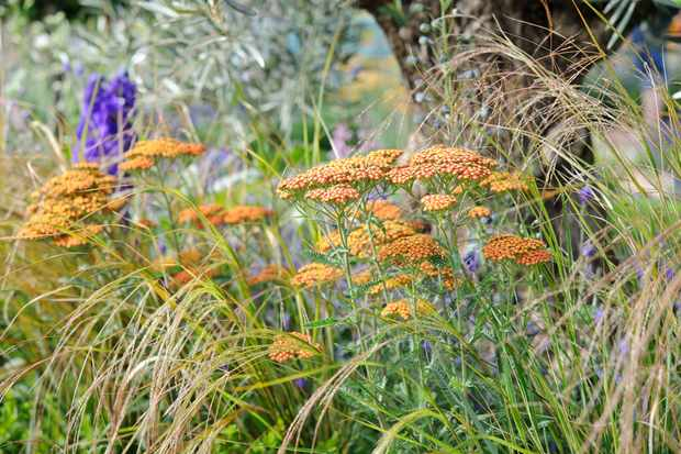 Planting Scheme for a Sunny Border