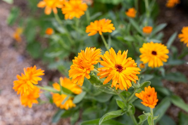 Plants to sow in september-5700
