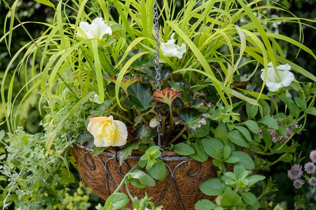 bedding-hanging-basket-for-shade-with-milium-and-begonia-2