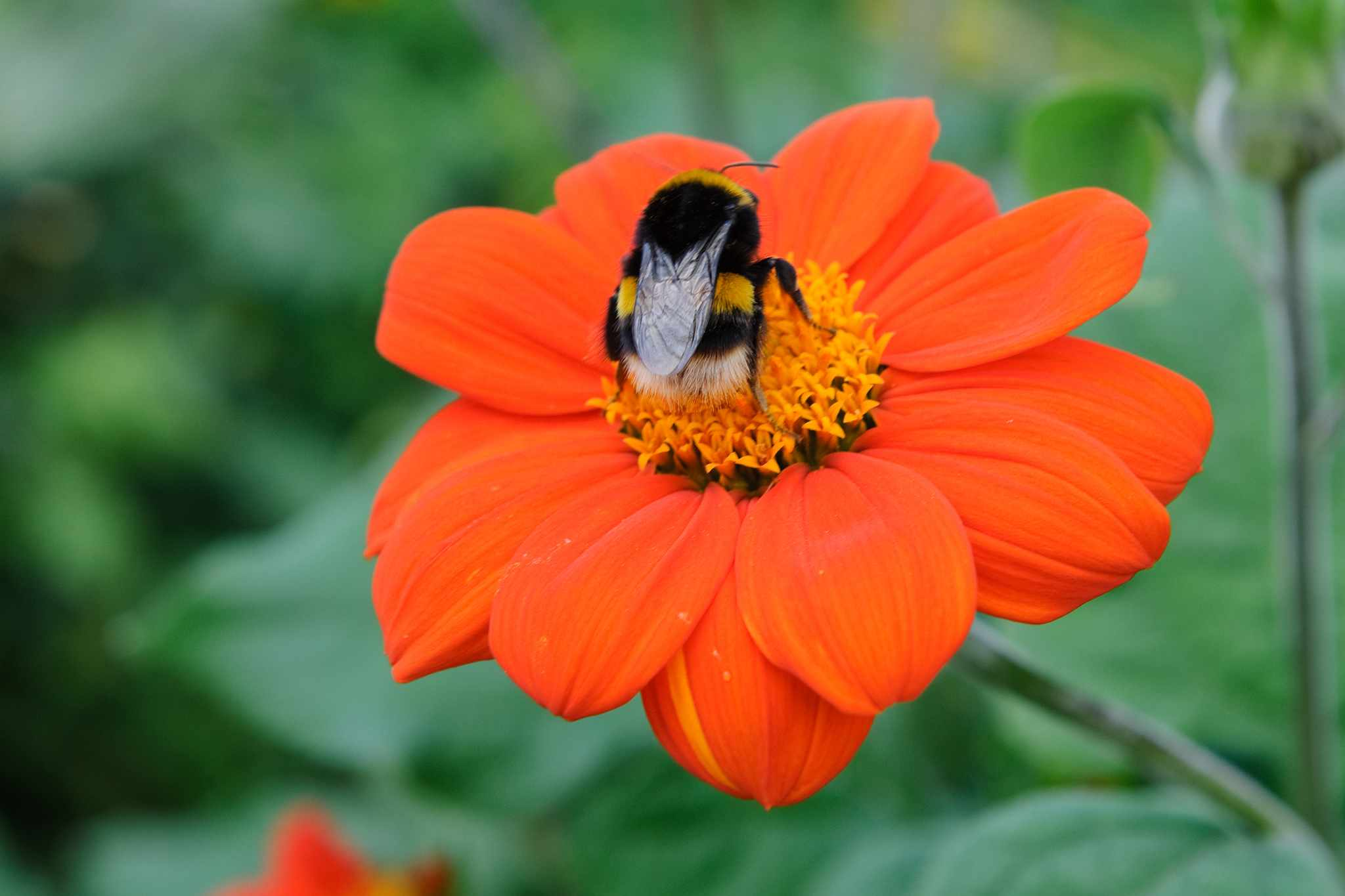 How to make a bee-friendly garden