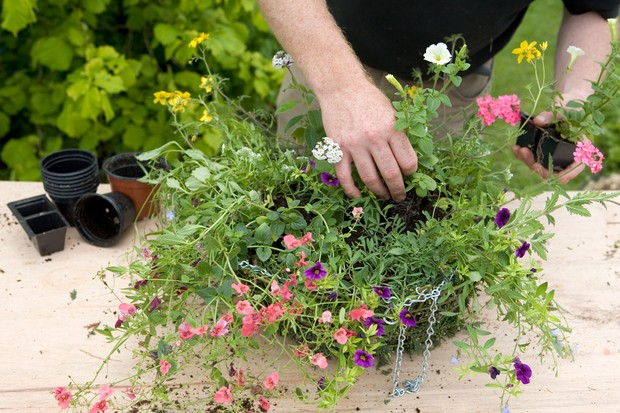 Adding the trailing plants around the edge of the basket