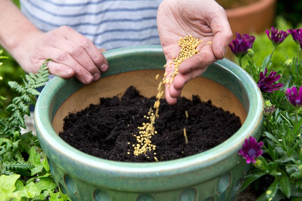 Adding slow-release fertiliser to the compost