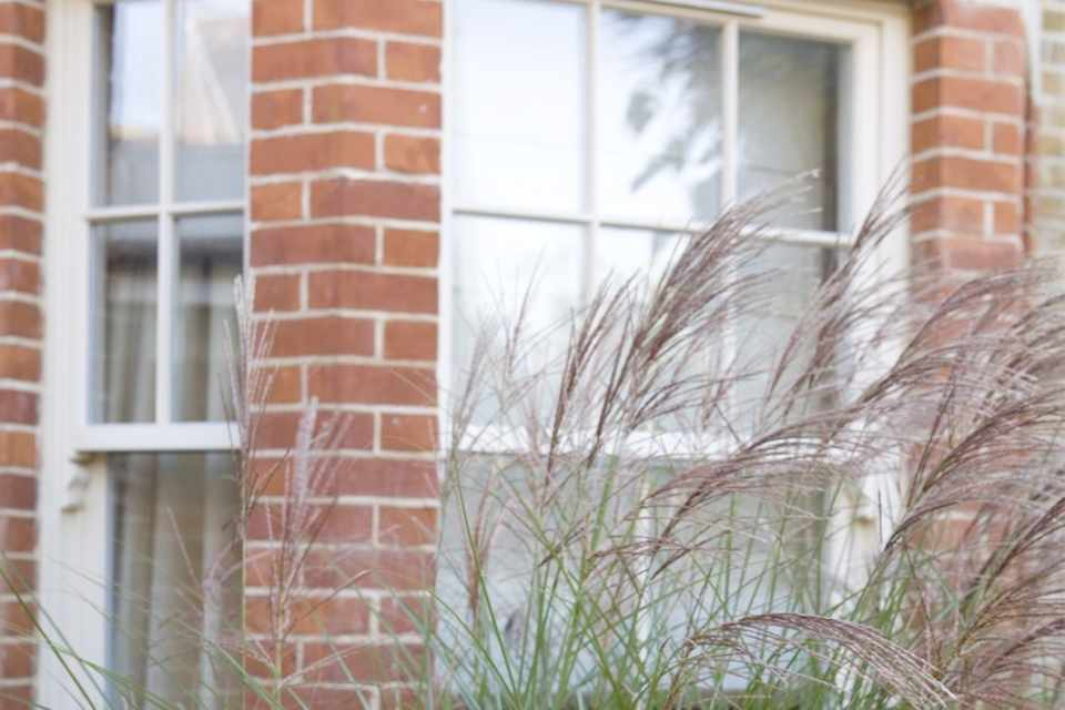 Graceful, tall miscanthus fronds screening a window