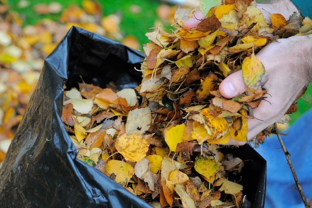 Filling a bag with autumn leaves