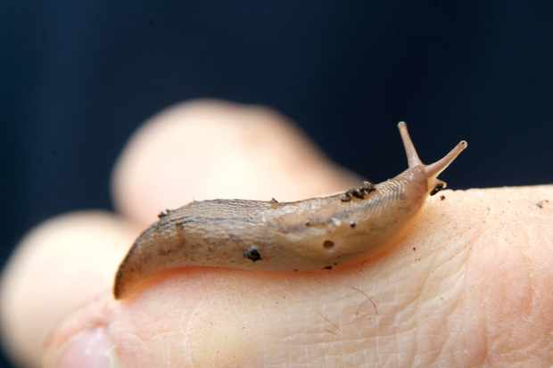 A slug on someone's hand