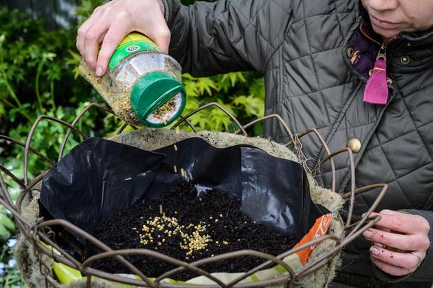 add-slow-release-fertiliser-granules-to-hanging-baskets