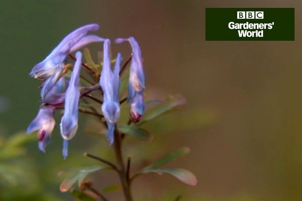 How to plant woodland perennials video
