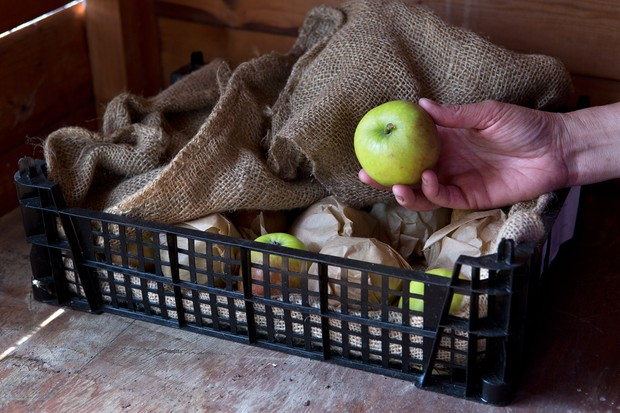 Taking an apple from storage in a crate wrapped in brown paper