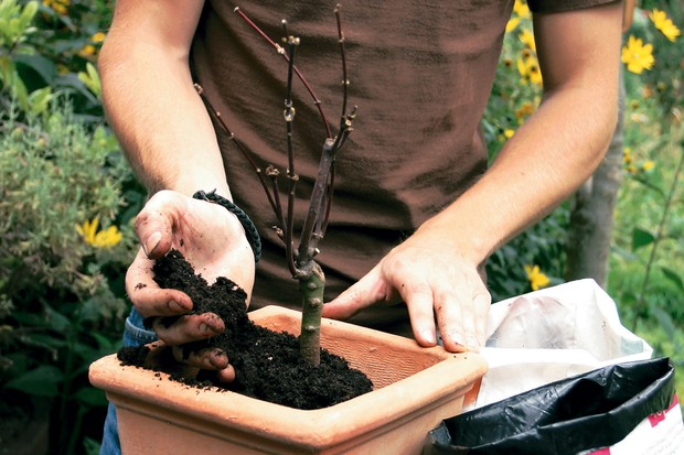 Fill around the plant with fresh compost