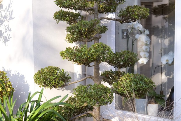 front-garden-with-cloud-pruned-box-buxus-2