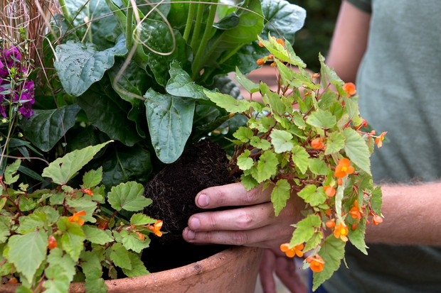 Planting around the edge of the container