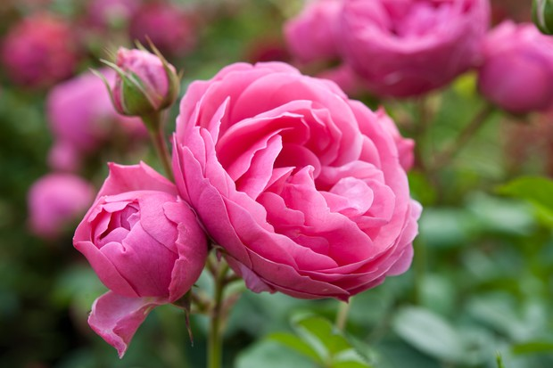 10 Flowers for Clay Soil - BBC Gardeners' World Magazine