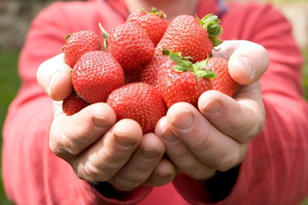 strawberries-19