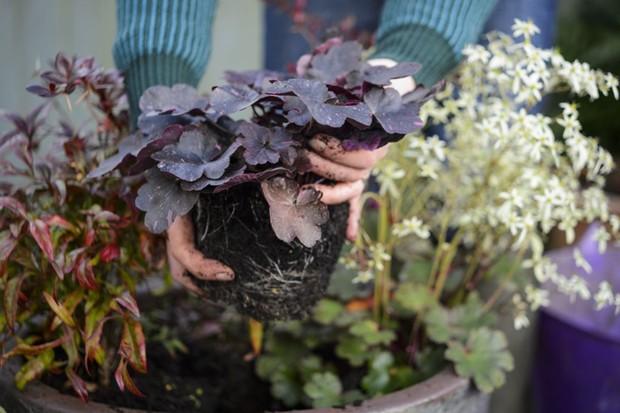 Adding plants around the berberis