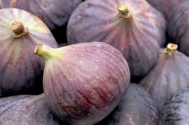 growing-figs-in-pots-2