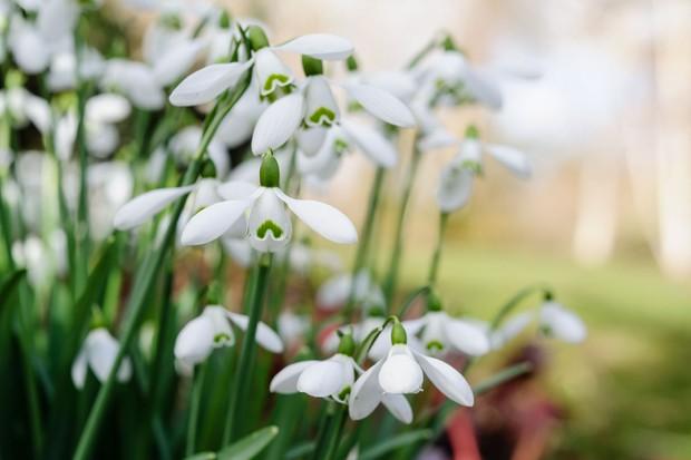 The Best Shade Loving Plants Gardenersworld