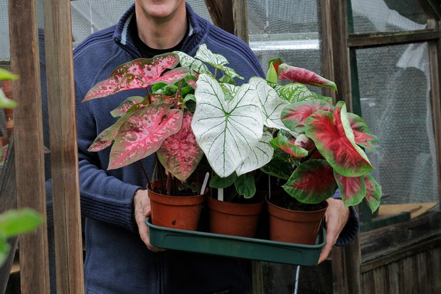 Moving Houseplants Outdoors in Summer - BBC Gardeners' World