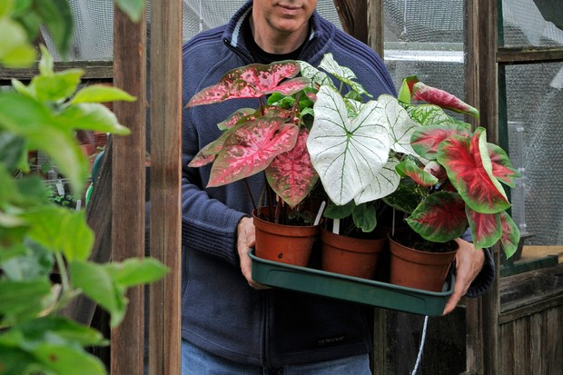 Carrying a tray of houseplants outdoors