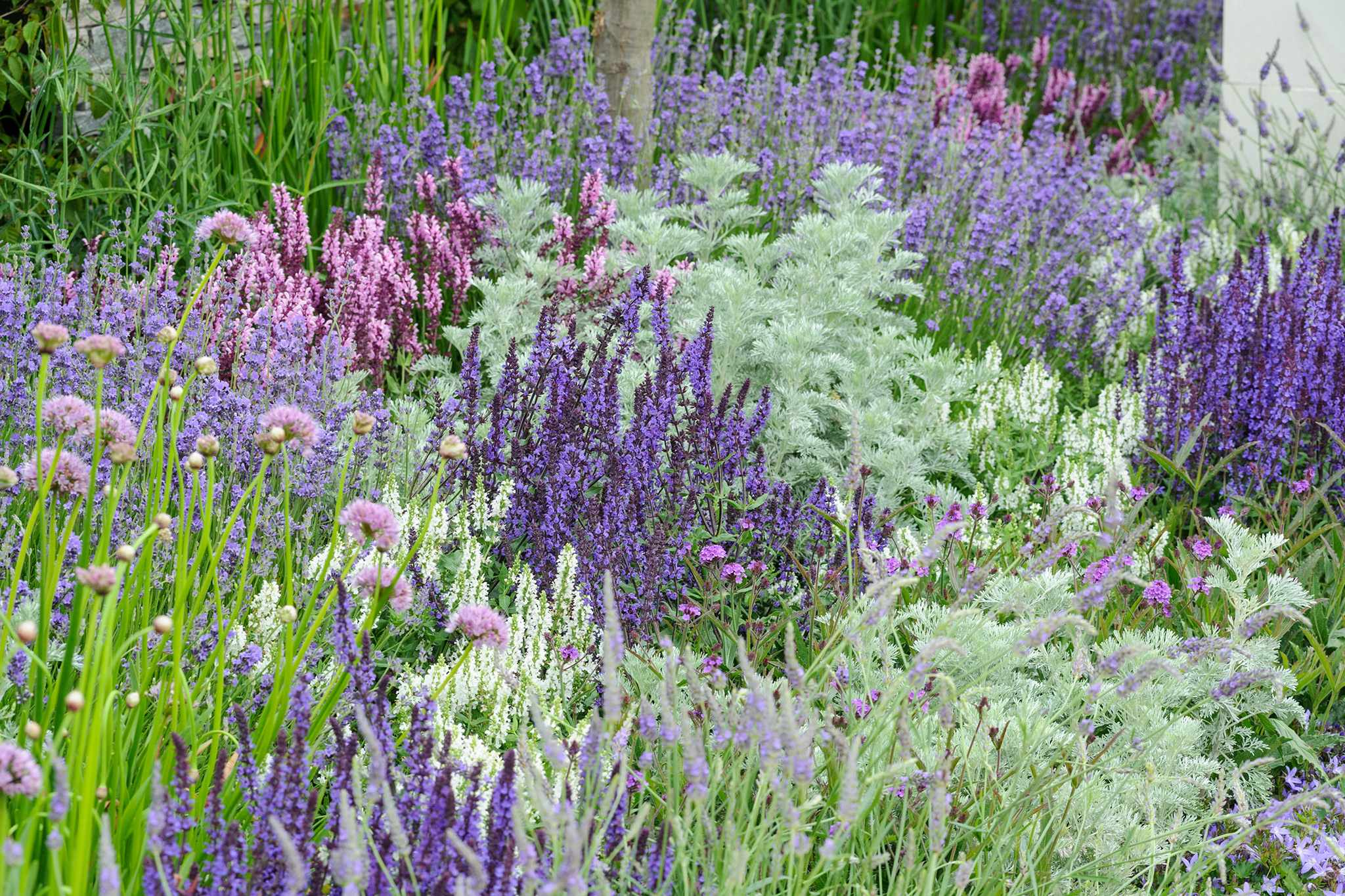 Six Garden Colour Schemes to Try