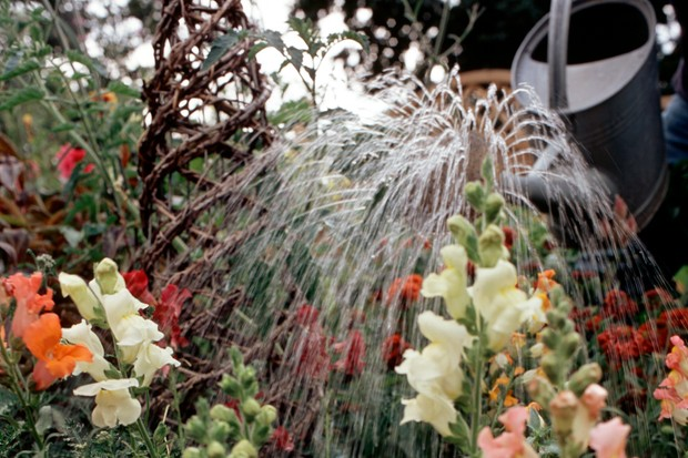 How to water your plants - watering flowering plants