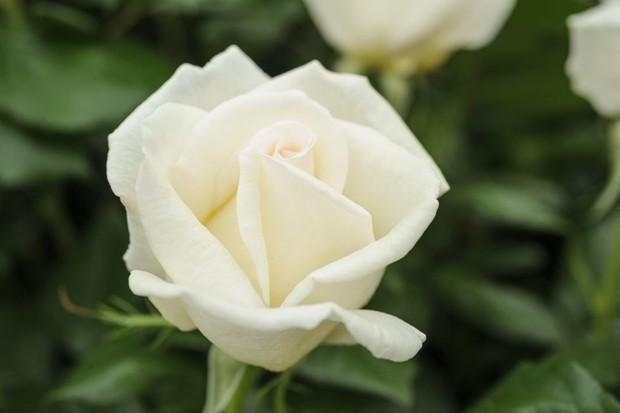 rosa-diamond-days-4