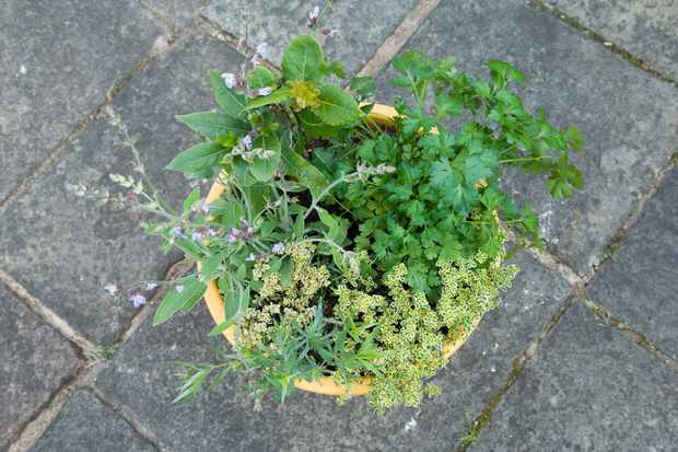 herb-pot-for-poultry-2