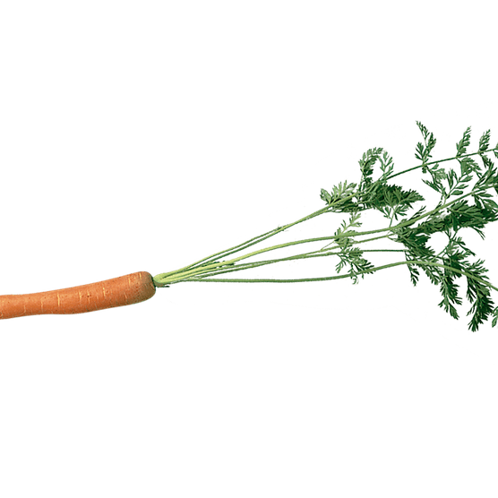Carrot with leaves attached