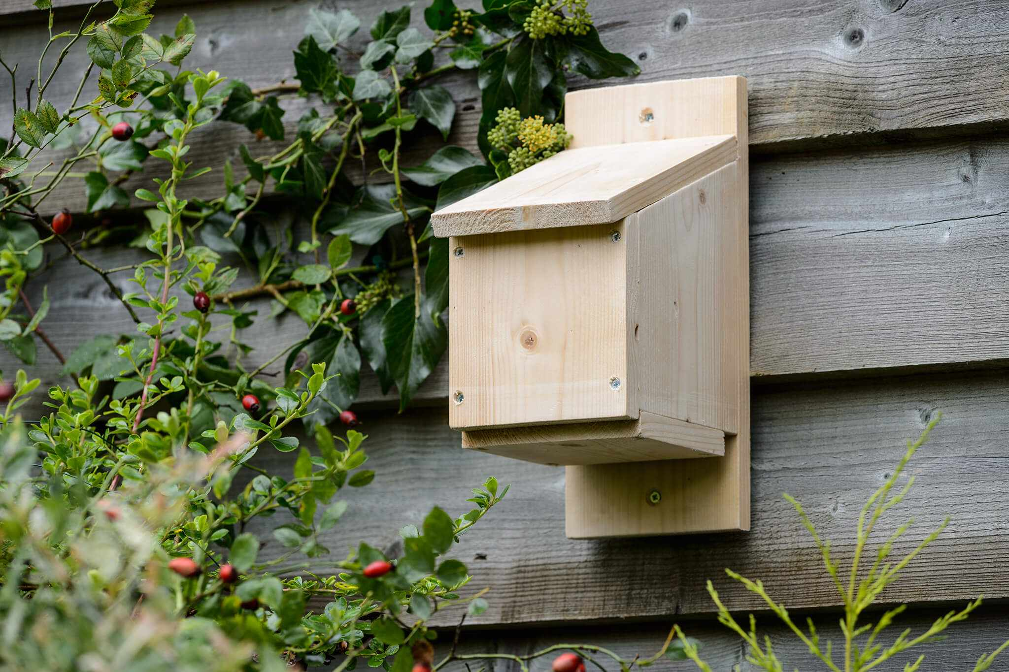 Make a Bat Box (step-by-step)