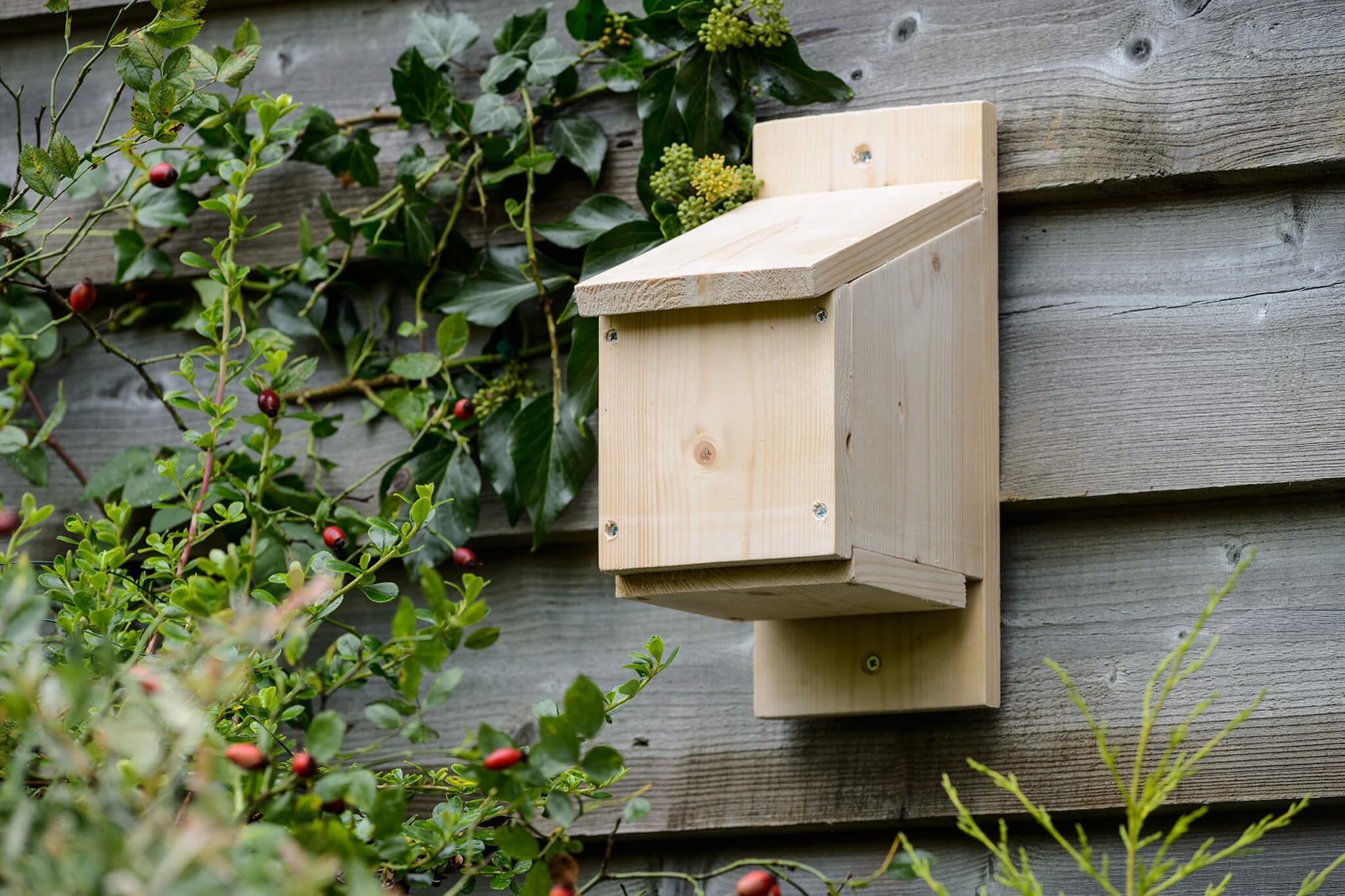 Make a Bat Box (step-by-step)