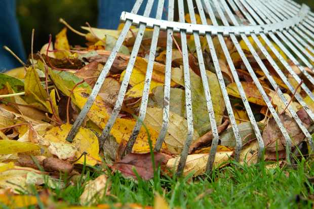 saving-fallen-leaves-for-wildlife-2