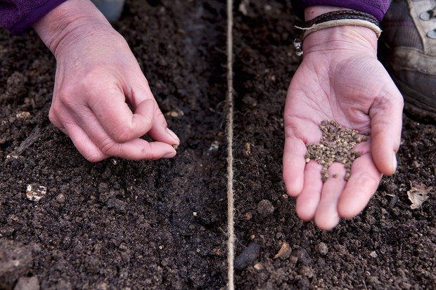 sowing-veg-seeds-direct-3