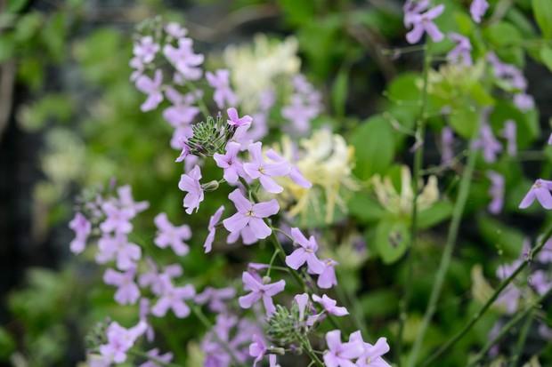 Best Plants With Purple Flowers Gardenersworld
