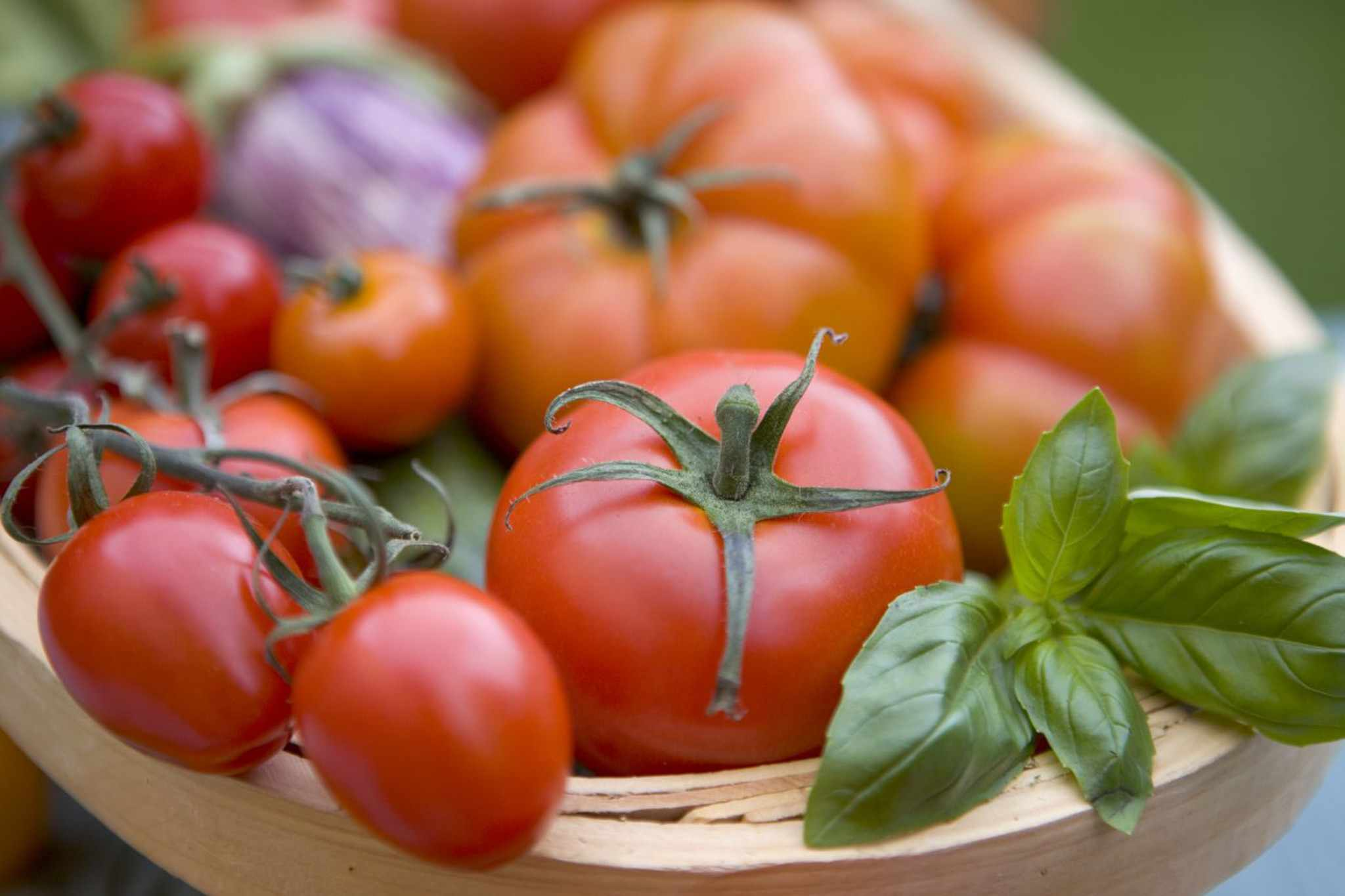 How to sow tomato seeds
