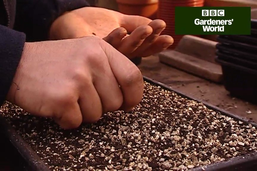 How to sow seeds indoors video