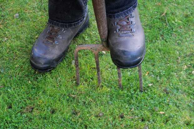 spiking-lawn-with-garden-fork-2