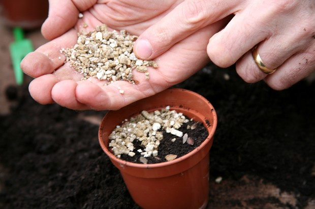 cover-the-seeds-with-vermiculite-2