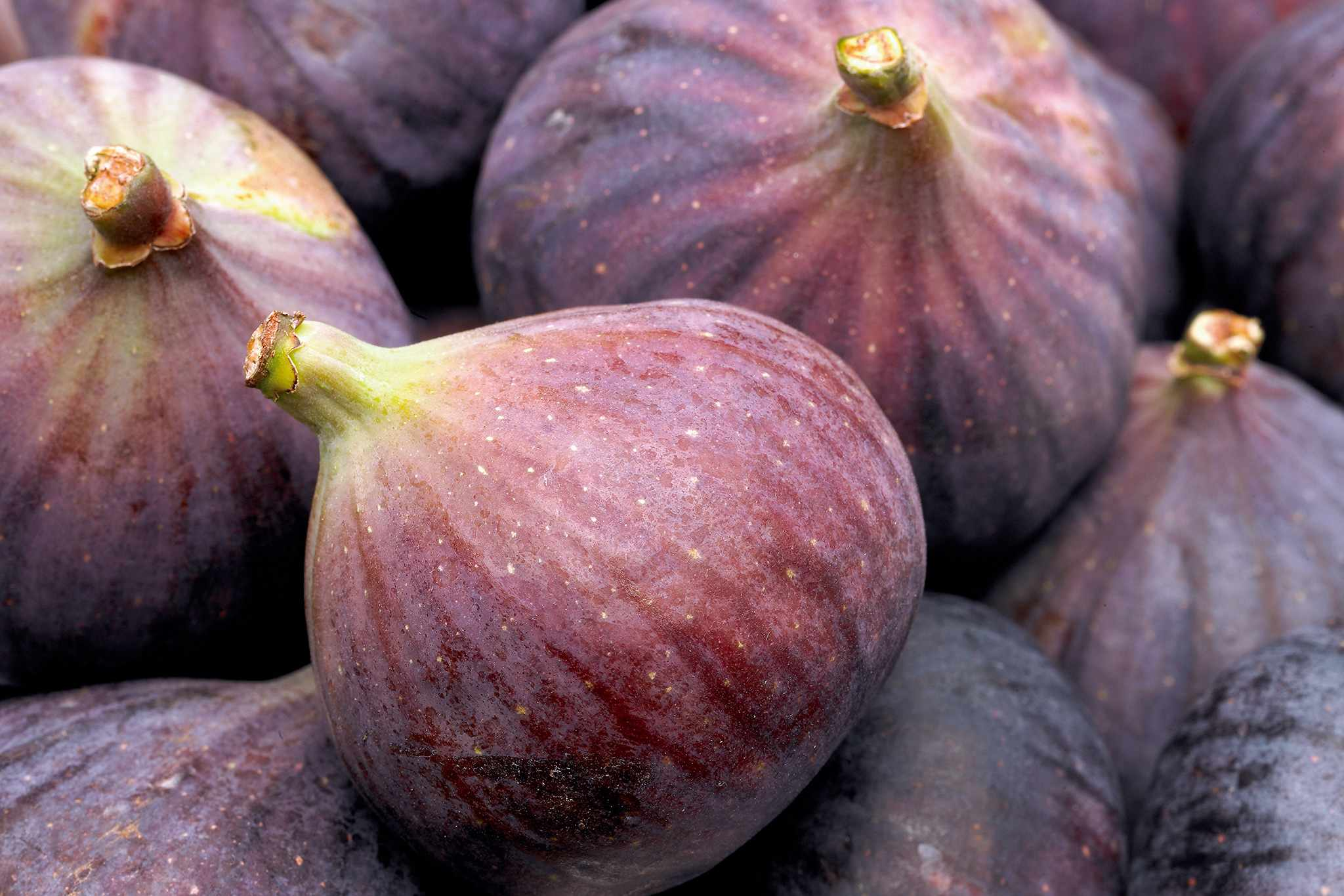Figs – Grow Guide