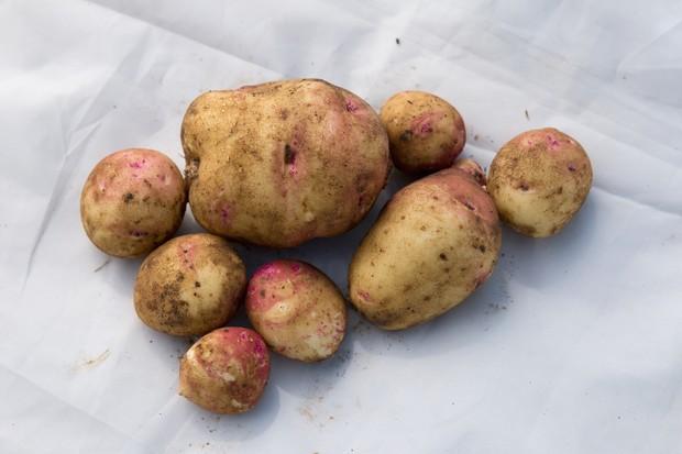 potato-cara-4
