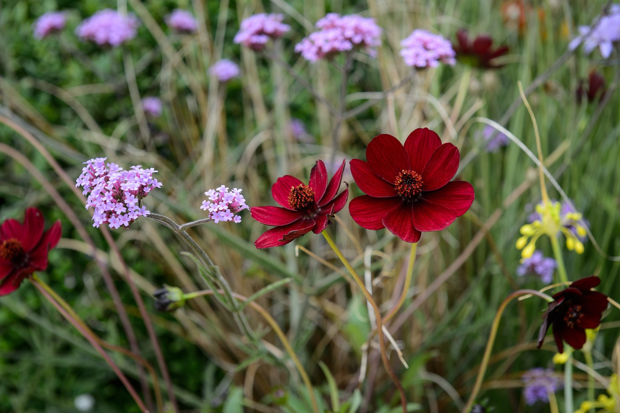 Features for wildlife - single flowers