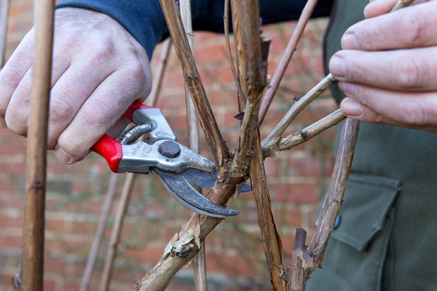 How to prune your plants - removing crossing stems