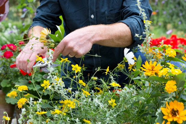 Deadheading a container flower display