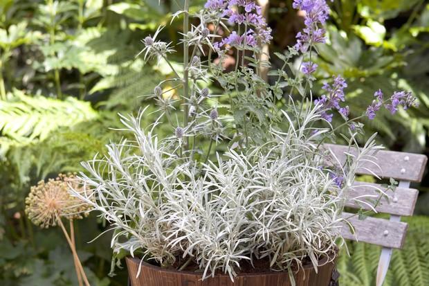 helichrysum-eryngium-and-nepeta-2