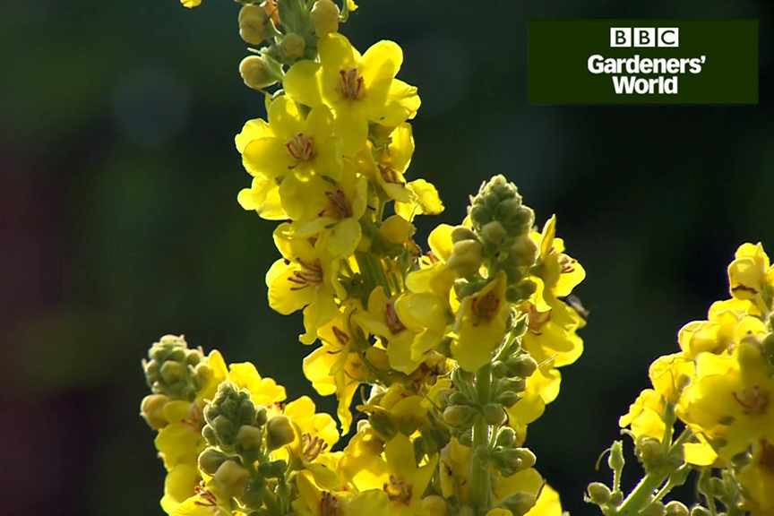 How to brighten up a sunny border
