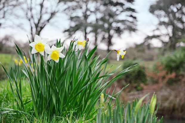 Flowering Plants for Graves