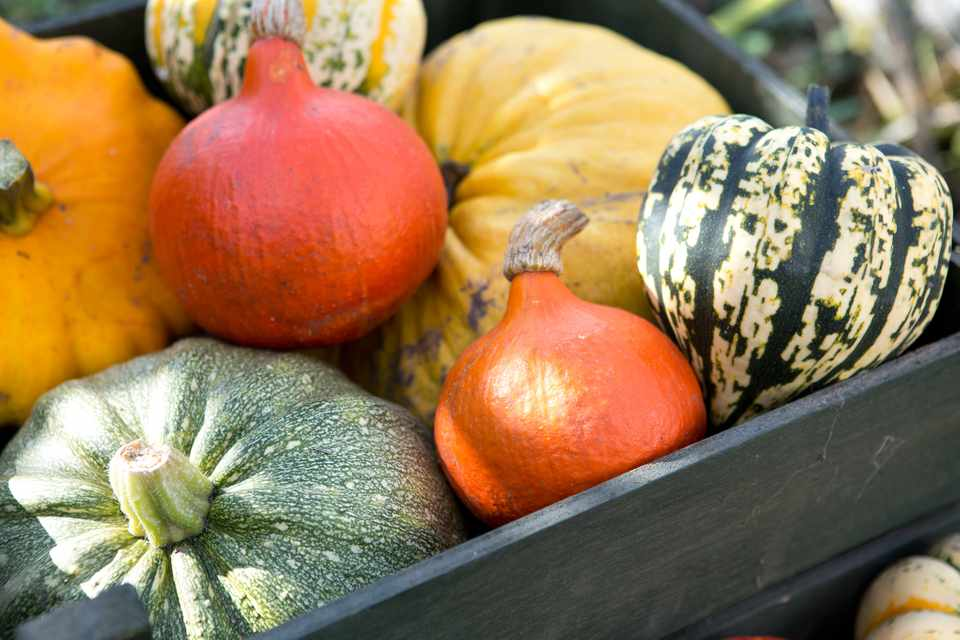 A multicoloured harvest of pumpkins and gourds