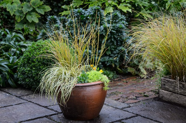 cornus-carex-and-sedum-2