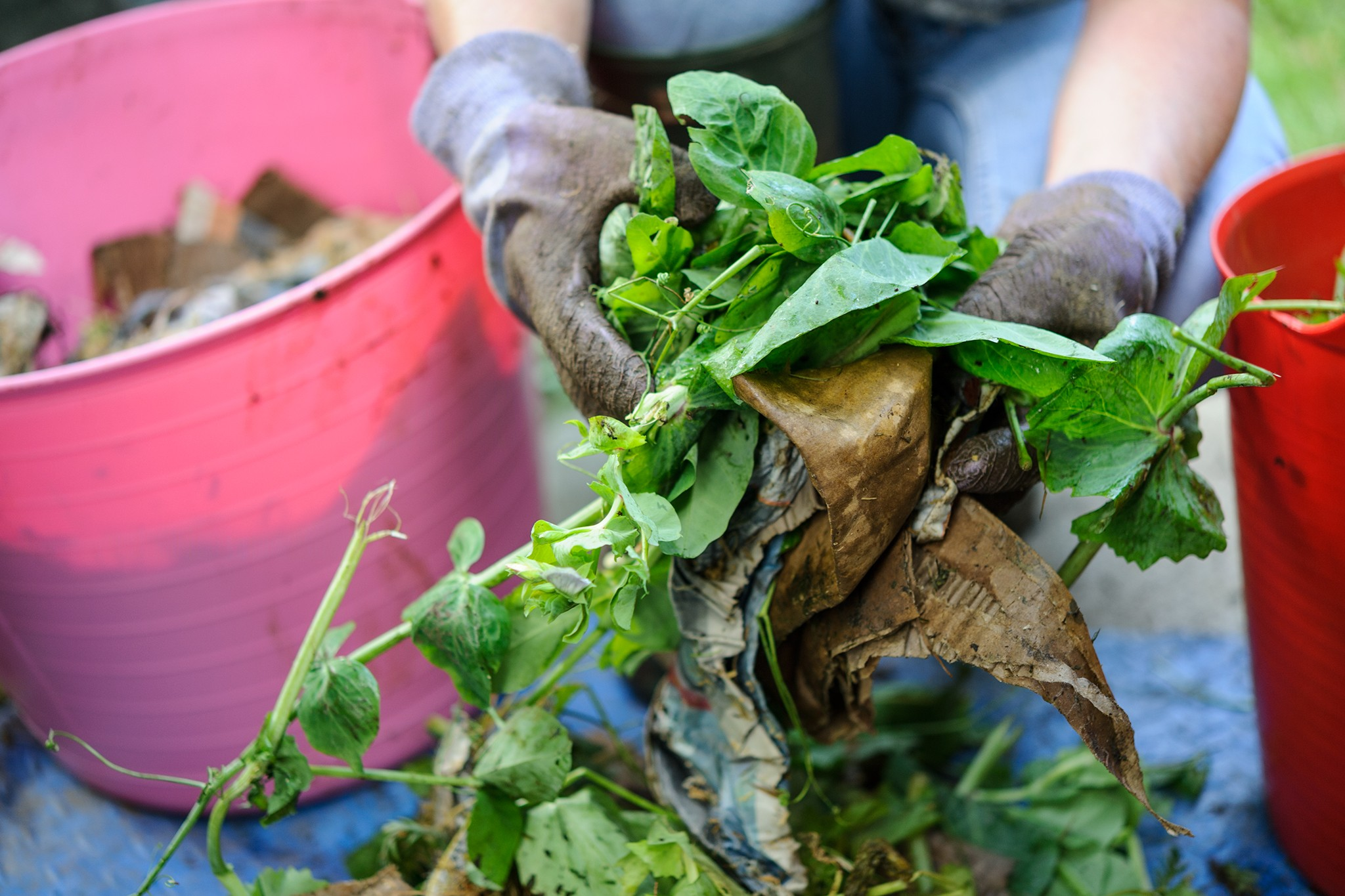 Make Compost (Step-By-Step Guide)