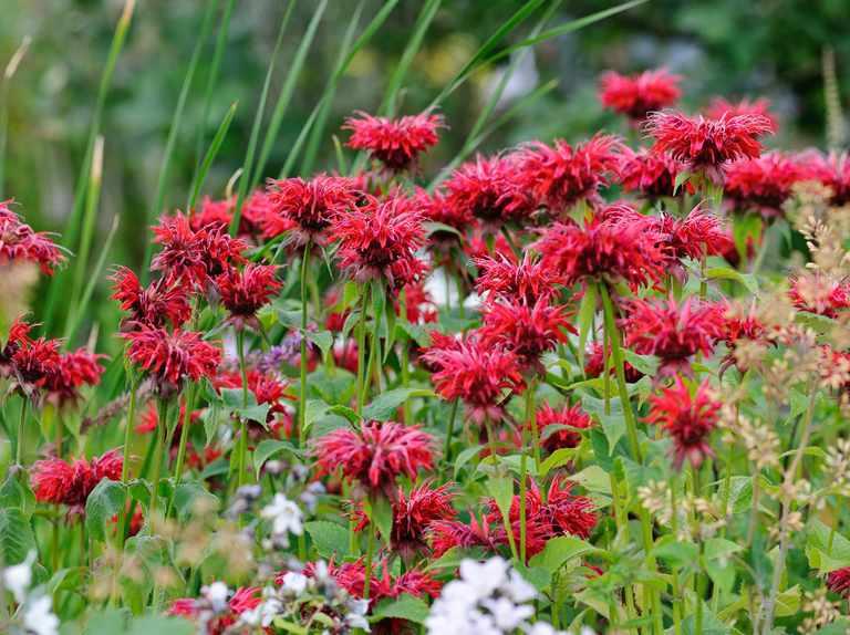 Flower seeds to sow in april gardenersworld mightylinksfo